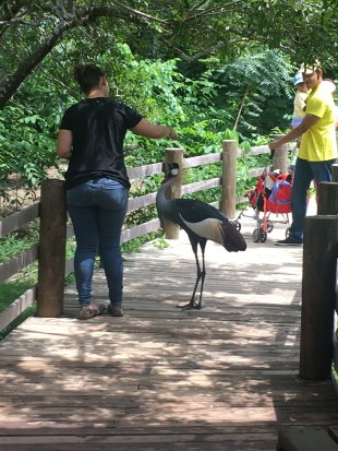 This one was friendly at the Aviario Nacional in Colombia