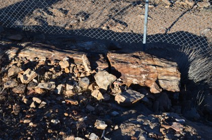 A petrified log at Valley of Fire State Park in Nevada