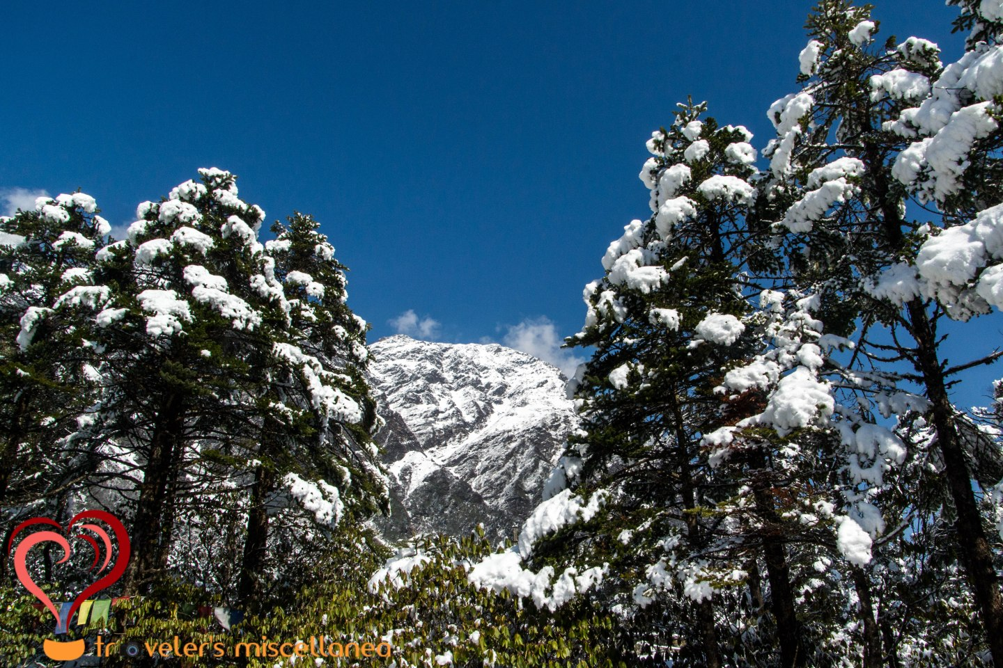 Lovely Conifers of Yumthang