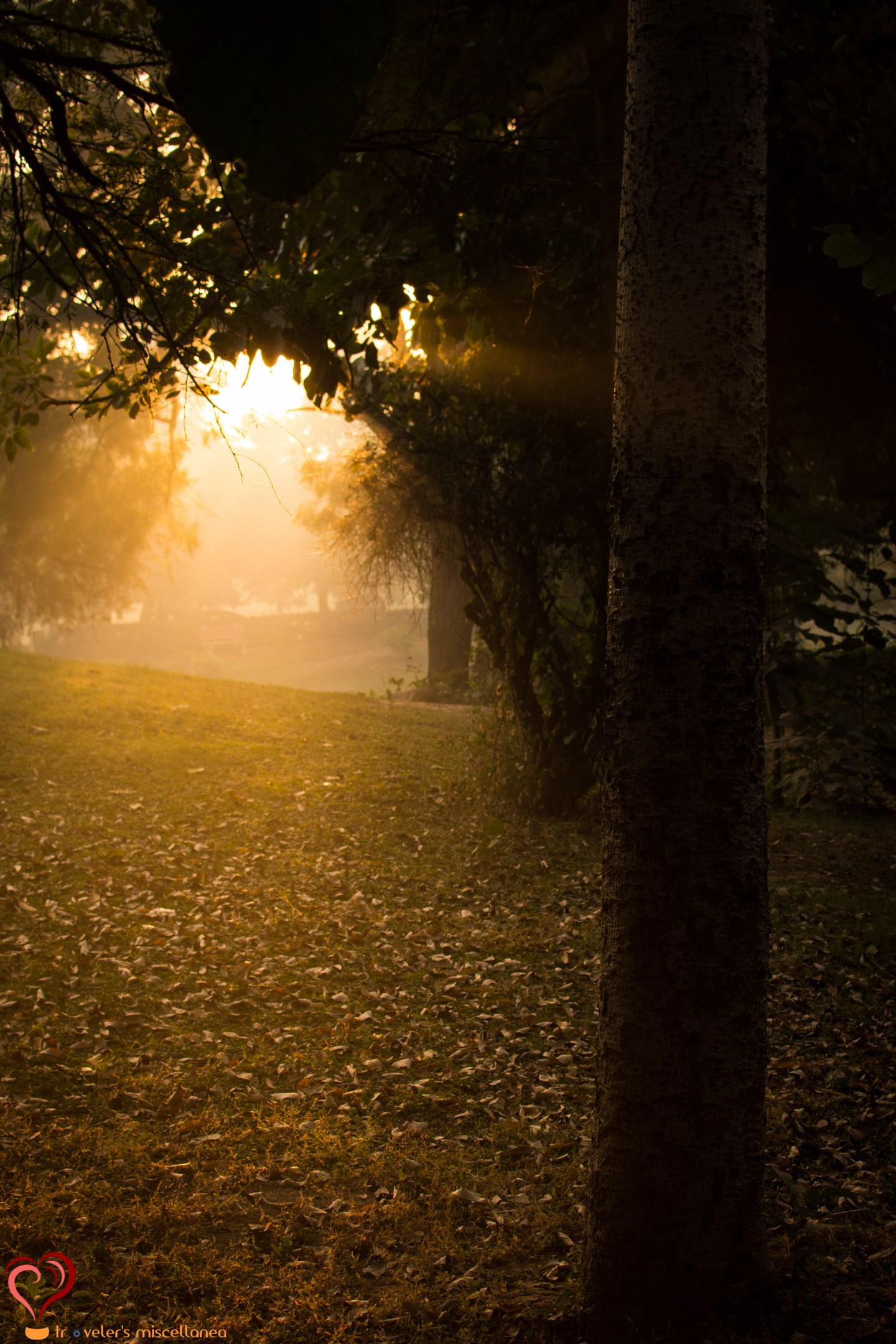 Sun Rays_