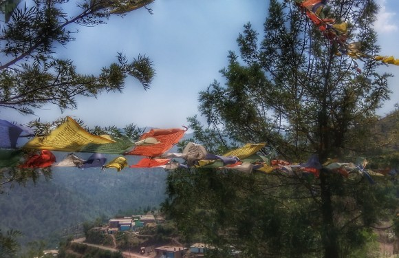 Five Things To Do In Kasauli