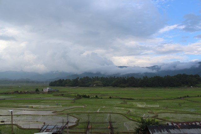 Rice fields at Ziro, Arunachal Pradesh