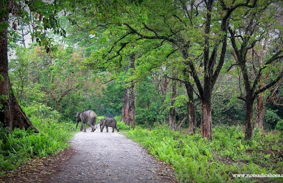 Manas National Park: Paradise Reclaimed