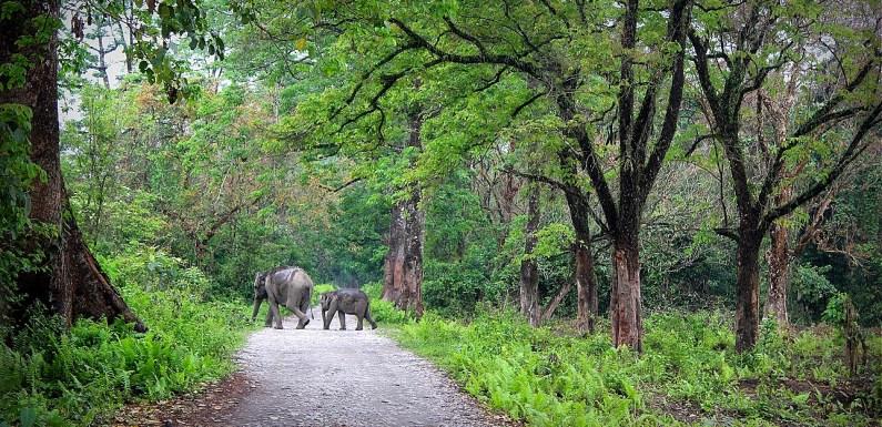 Manas National Park: Paradise Reclaimed