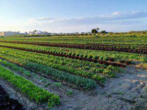 agricultura_huerta_nomadic-e1575623717142
