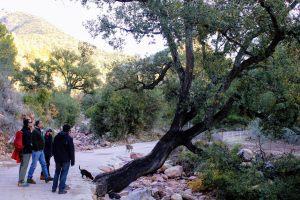 espadan_parque_natural_nomadic-min