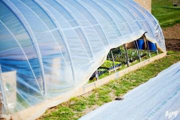 Annie's Farm 030 copy