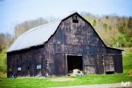 Annie's Farm 053 copy