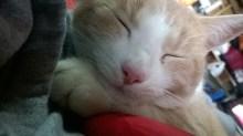Bob's my cuddle buddy