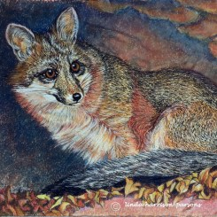 Little Shy Gray Fox — pastel