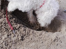 Digging for victory