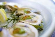 raw oysters - élan