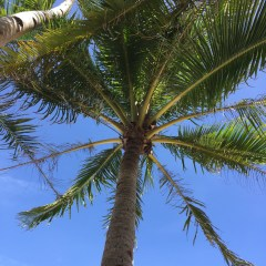 Win a Free Trip to Punta Cana, Dominican Republic!