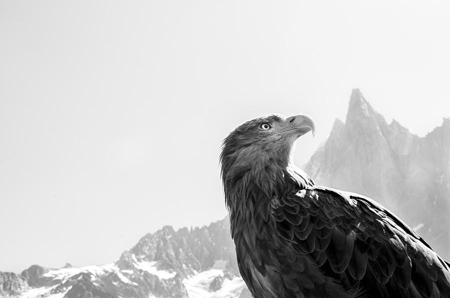 Eagle Wings beim Zingst Umwelt-Fotofestival