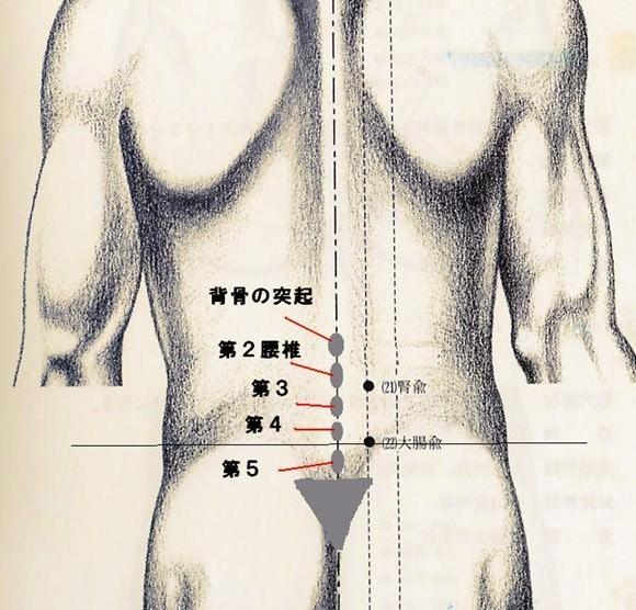 腰椎の場所の確認ができるイラスト