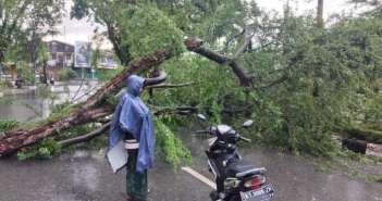 Hujan Lebat di Balikpapan, Pohon Tumbang Timpa Pengendara Motor