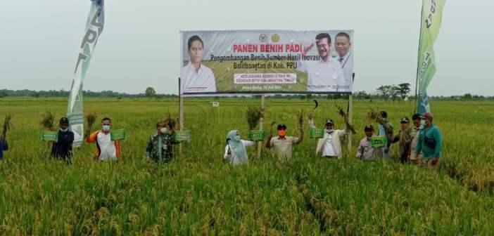 Petani PPU Sukses Panen Padi Benih Pengembangan