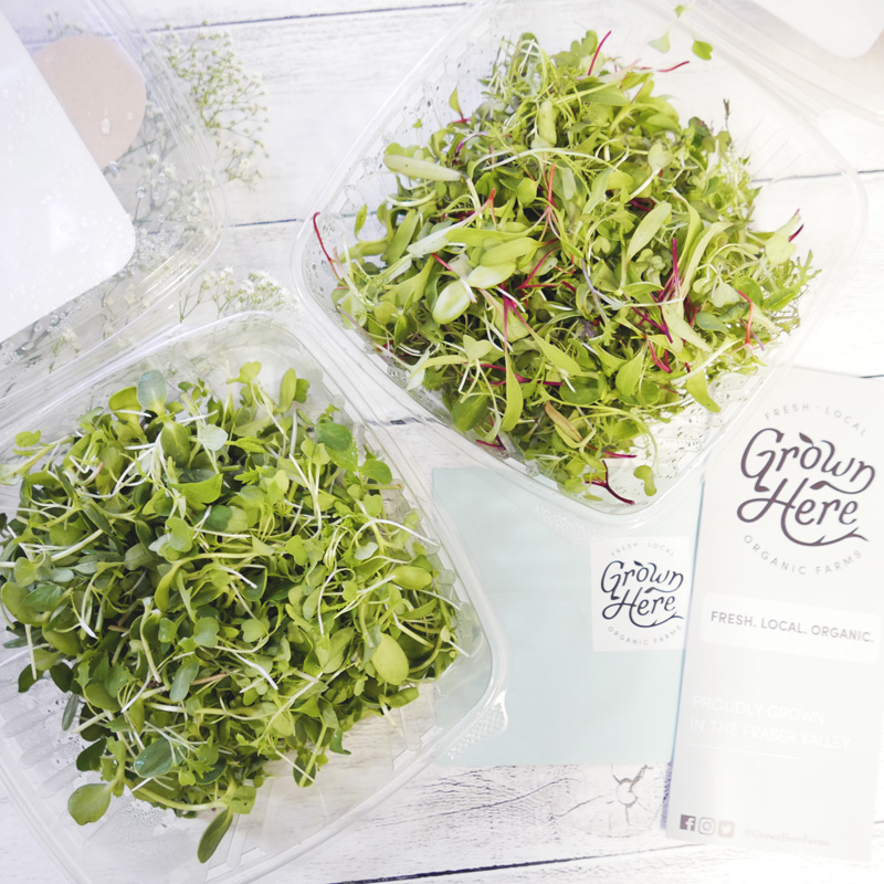 Grown Here Farms Organic Microgreens Vancouver BC Nomss Delicious Food Photography Healthy Travel Lifestyle