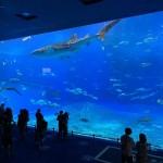 美ら海水族館②