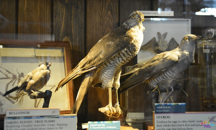 Grant Museu de Zoologia