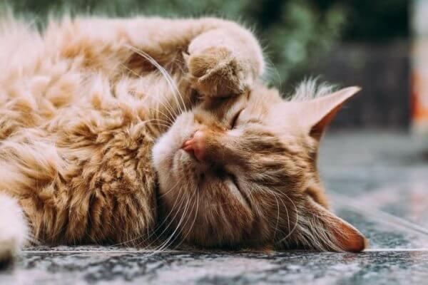cara meredakan demam kucing tanpa ke dokter