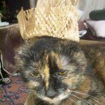 シニアの生活に役に立つかな?2月22日は「猫の日」
