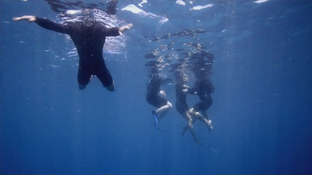 The Reef Surf adventure travel thriller film for digital nomads and travelers
