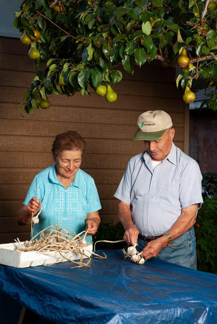nonna and nonno braiding garlic in the garden