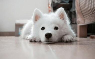 dog-617041_1280