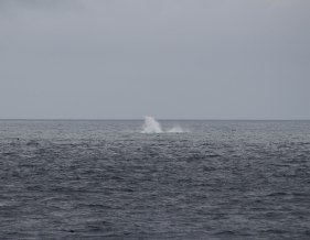 aftermath of a breaching blue whale