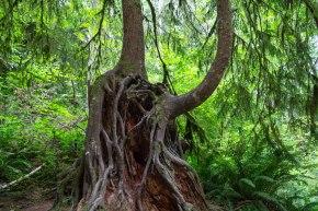 tree growing on a tree
