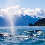 Things to Know Before your Alaska Cruise