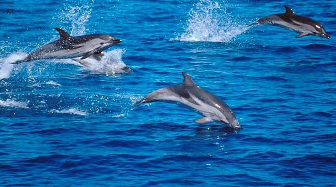 santuario internazionale dei cetacei