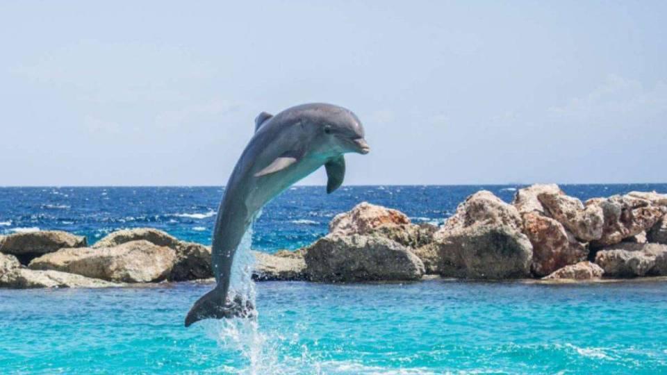 Taranto, si pensa a un ricovero per delfini intorno all'isola di San Paolo