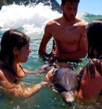 delfino in fin di vita a ischia