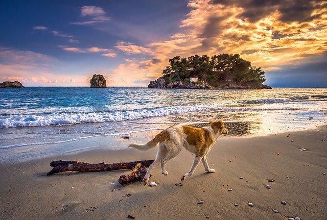 Vacanze, l'estate 2020 all'insegna del dog-friendly per vip e influencer