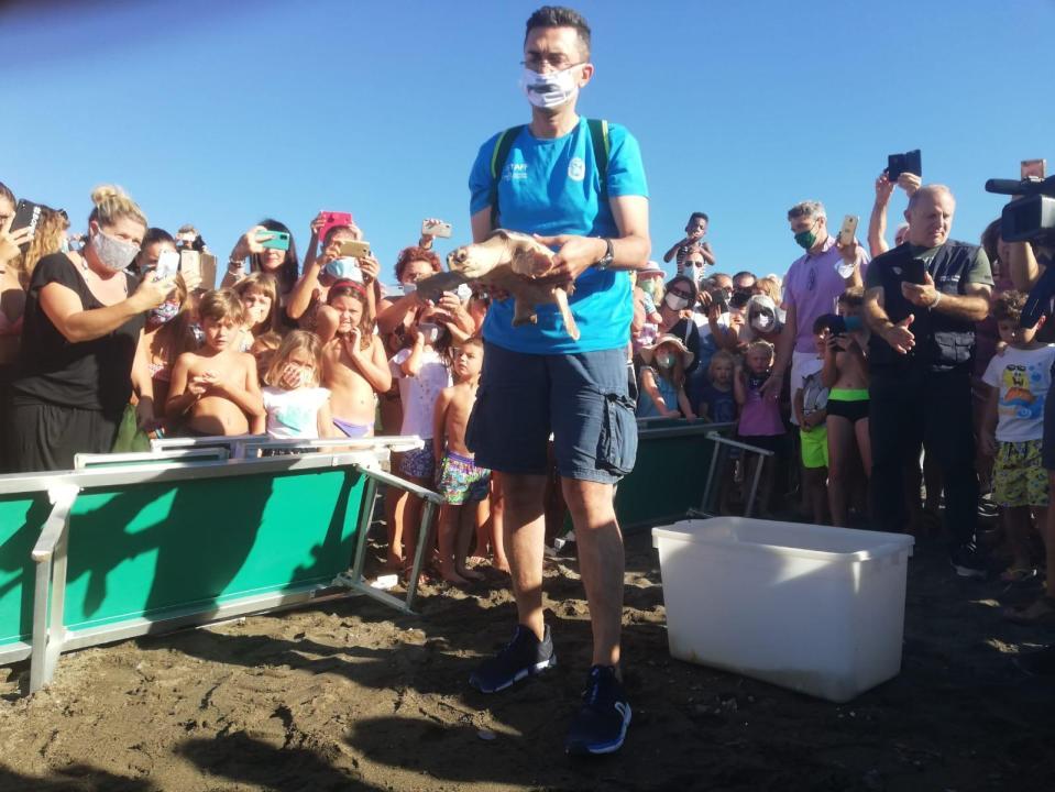 Cecina: la tartaruga Nanà curata all'Acquario di Livorno è tornata in mare