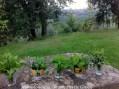 le mie erbe selvatiche