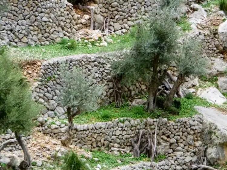 I muretti a secco della sierra Tramontana