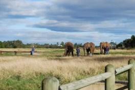 L'Elephant Sanctuary a Plettenberg bay