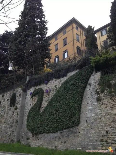 Il cigno sulle mura di Bergamo