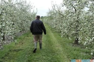 Campi di mele