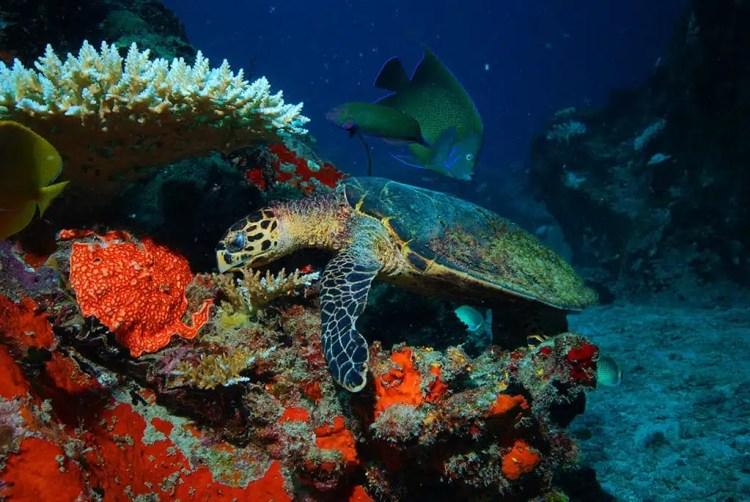 Seychelles – tartaruga marina