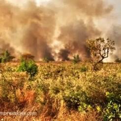 Foresta in fiamme - Guinea