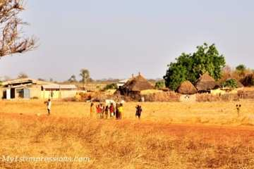 Savana - Guinea