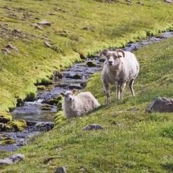 Triollaskagi, Islanda