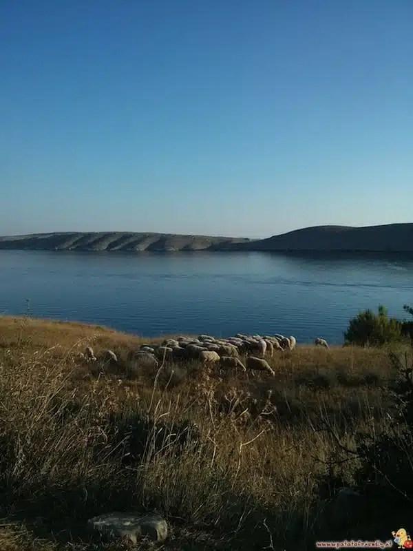 Pecore e mare