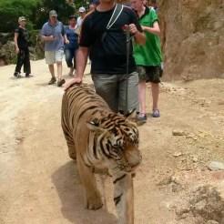 Tiger Temple - Kanchanaburi, Tailandia