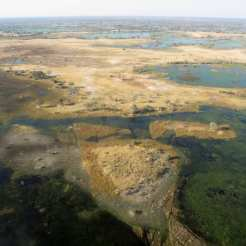 Safari Australe Ovest - Okavango, Botswana