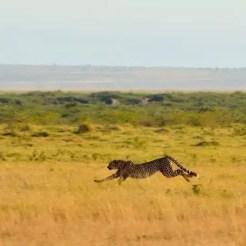 Amboseli - Kenya